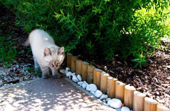 Katze am Hof