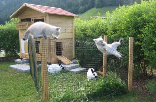 cats-untersieglerhof-2